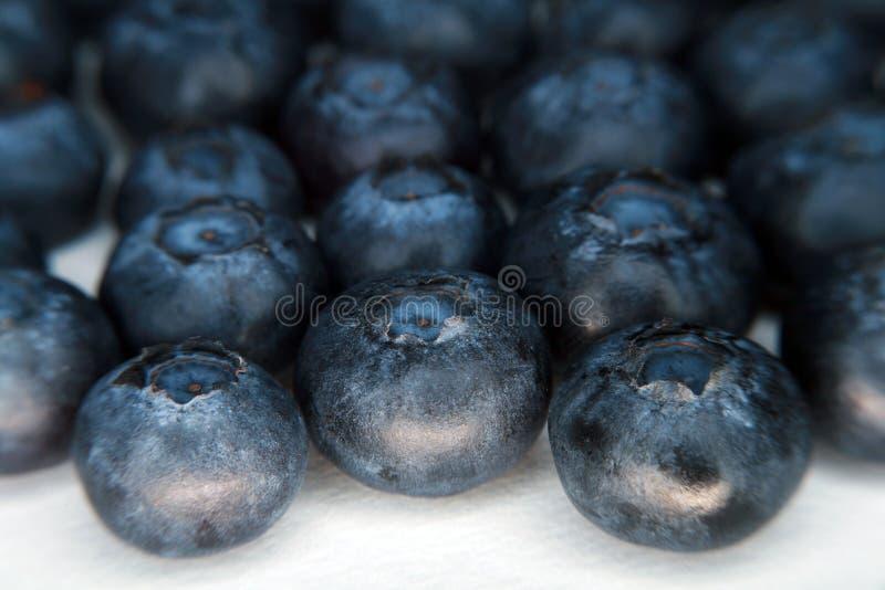 Frische organische Blaubeeren 2 stockfotografie
