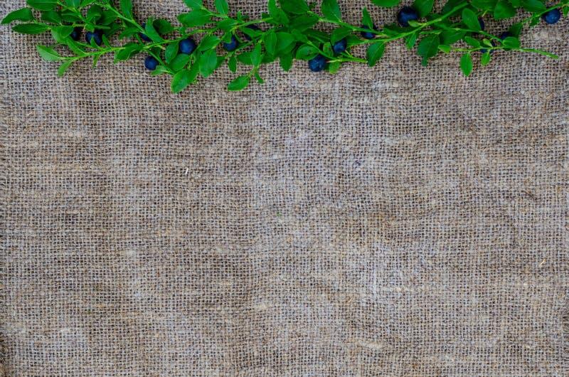 Frische organische Blaubeeren auf einem Sackleinenhintergrund Beschneidungspfad eingeschlossen Konzept des gesunden und n?hrenden stockfoto