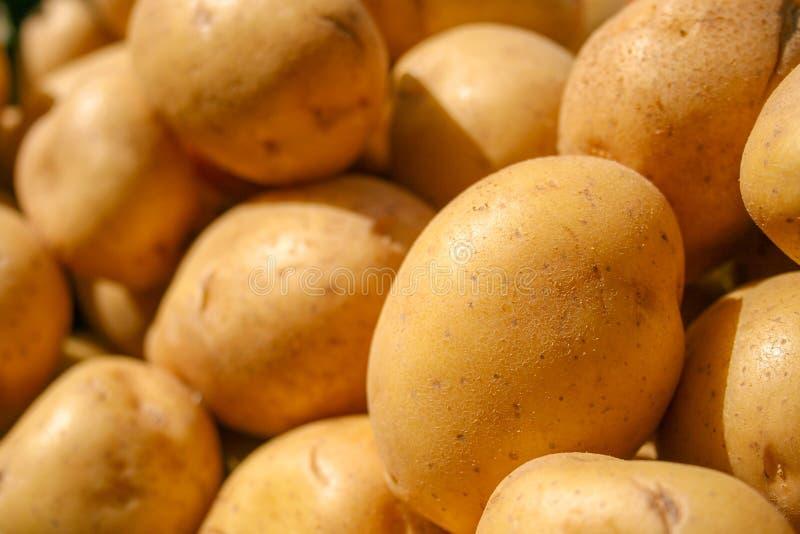 Frische organische Kartoffel stehen heraus unter vielen großen Hintergrundkartoffeln stockbild