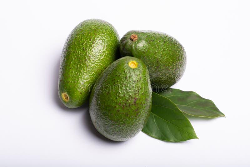 Frische organische reife grüne Fuerte-Avocado mit Blättern, Kopienraum stockfotos