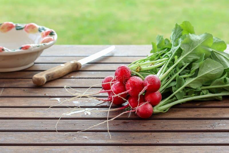 Frische organische Rettiche bereit, für Salat auf einem Holztisch geschnitten zu werden lizenzfreie stockfotografie