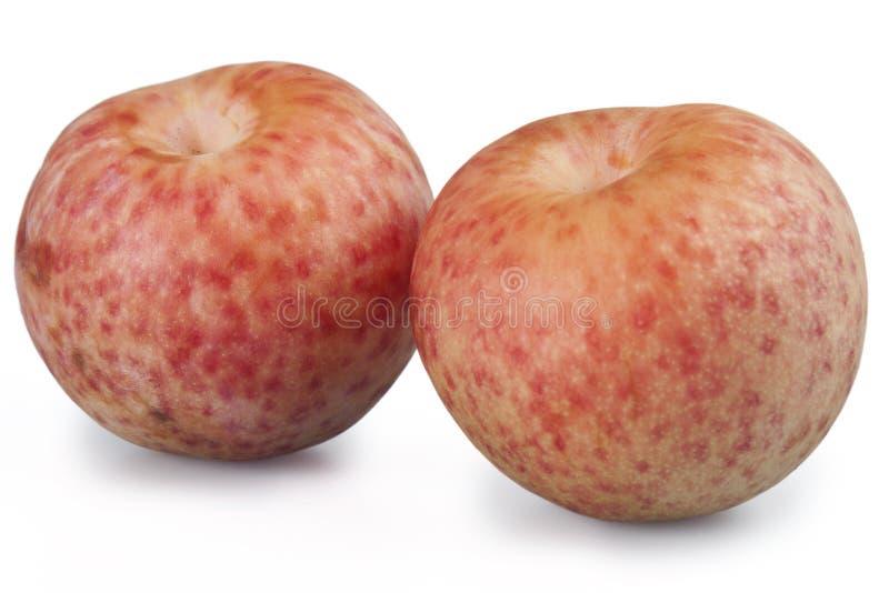 Frische Pfirsiche lizenzfreies stockbild