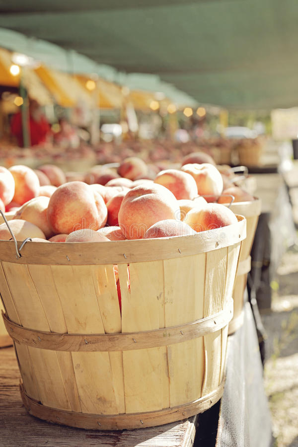 Frische Pfirsiche stockfotografie