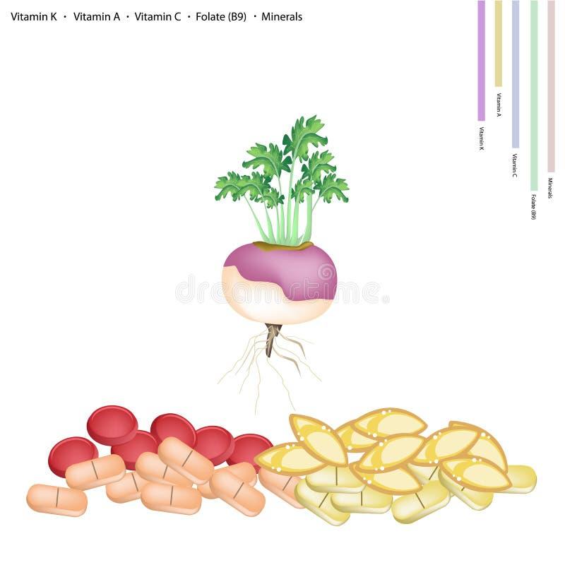 Frische Rübe mit Vitamin K, A, C und B9 lizenzfreie abbildung