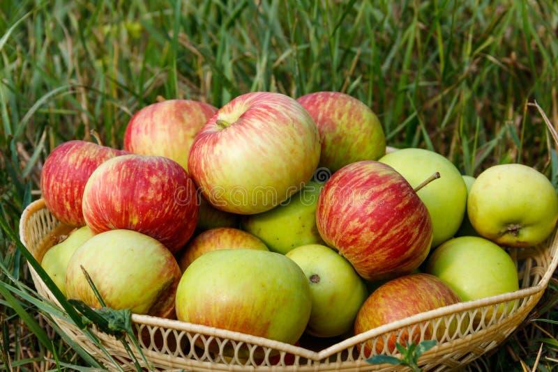 Frische reife Äpfel im Korb auf dem grünen Gras lizenzfreies stockbild