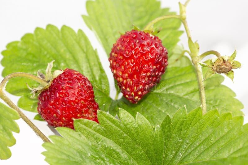 Frische. Reife Früchte. stockbilder