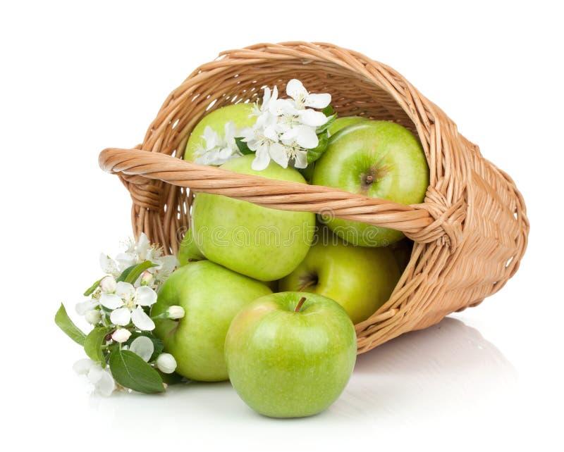 Frische reife grüne Äpfel im Korb lizenzfreie stockfotografie