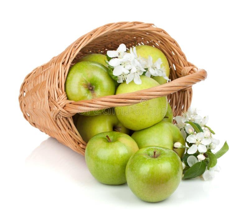 Frische reife grüne Äpfel im Korb stockbild