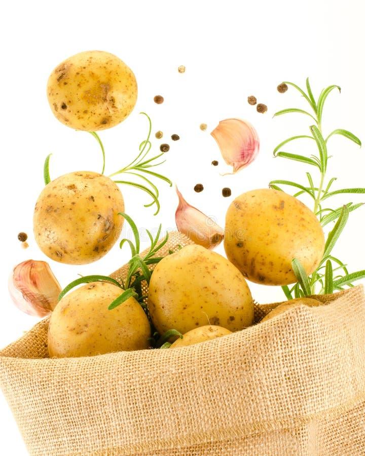 Frische reife Kartoffeln stockbilder