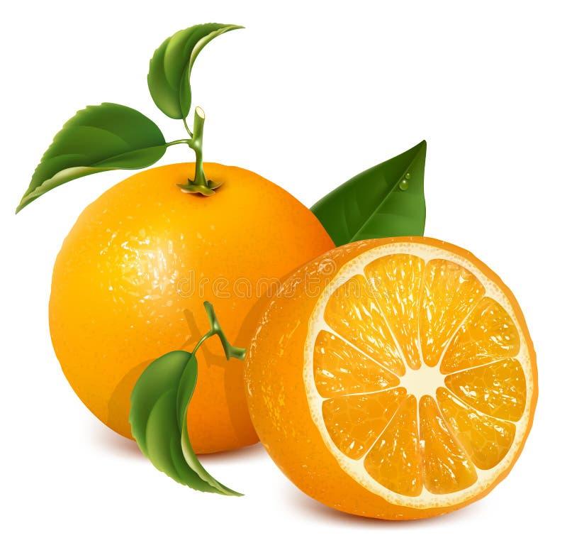 Frische reife Orangen mit Blättern. stock abbildung