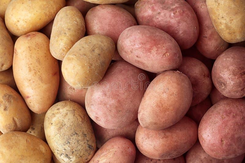 Frische reife organische Kartoffeln als Hintergrund stockfotografie