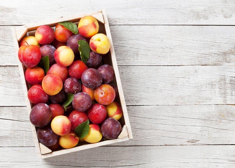 Frische reife Pfirsiche und Pflaumen lizenzfreie stockfotos
