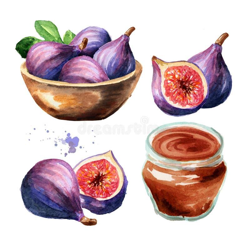 Frische reife purpurrote Feigenfrucht mit Schüssel und organischem Stausatz Gezeichnete Illustration des Aquarells Hand, lokalisi lizenzfreies stockbild