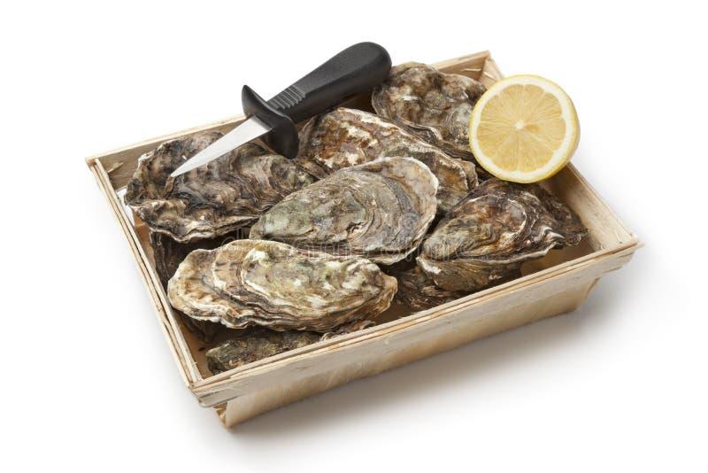 Frische rohe Austern in einem Kasten stockfotos