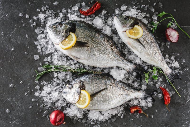 Frische rohe dorado Fische mit Gewürzen, Zitrone, Pfeffer, Rosmarin auf Eis über dunklem Steinhintergrund Kreativer Plan gemacht  stockfotos