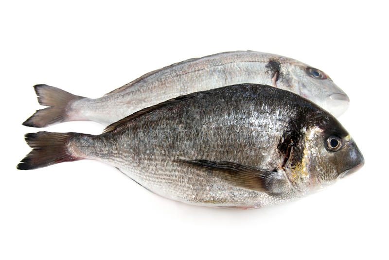 Frische rohe Fische lizenzfreie stockbilder