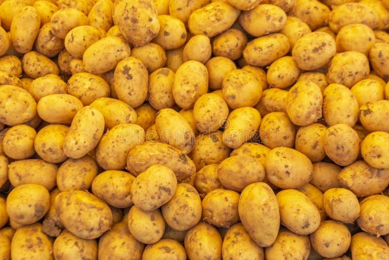 Frische rohe junge Kartoffeln im Stapel lizenzfreie stockbilder