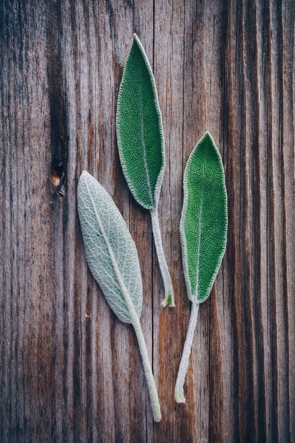 Frische rohe Salbeiblätter auf Holztisch lizenzfreies stockbild
