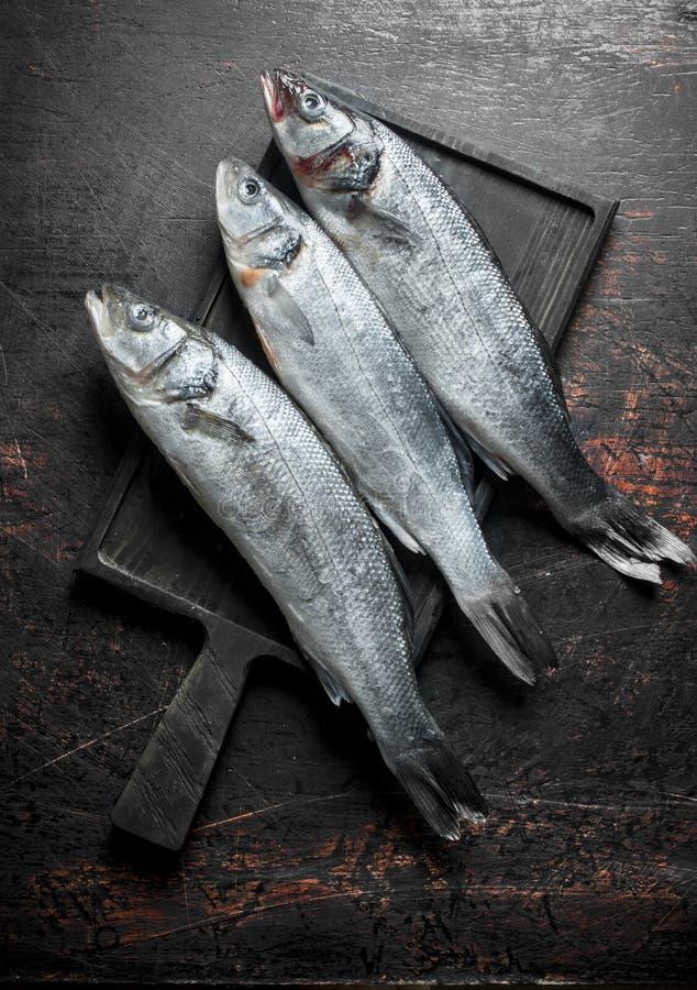Frische rohe Seebarschfische stockfoto