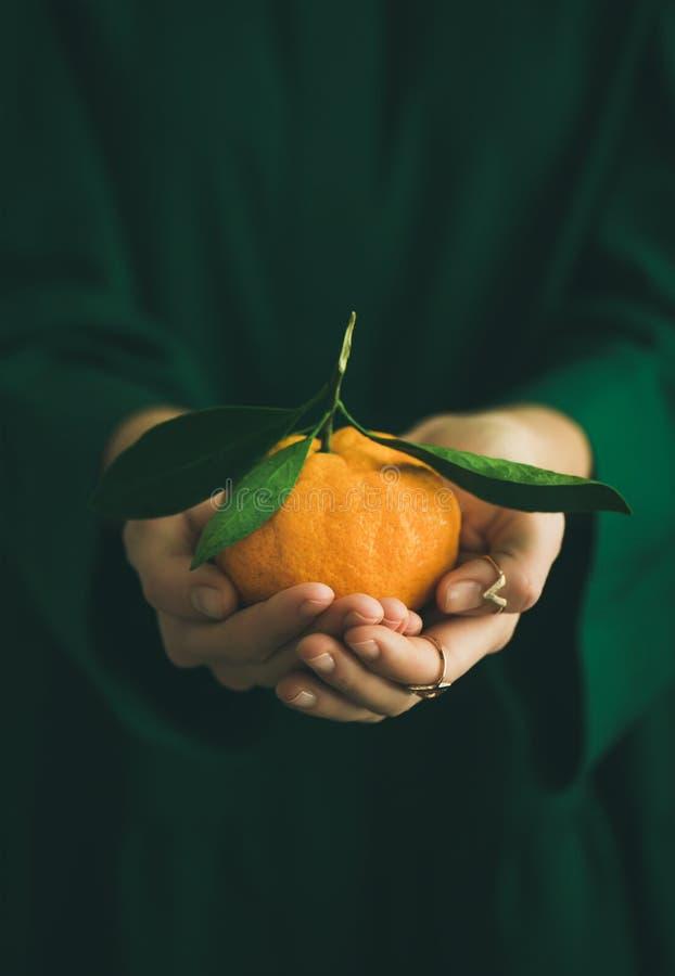 Frische rohe Tangerinefrucht in den Händen von Dame, Kopienraum lizenzfreie stockfotografie