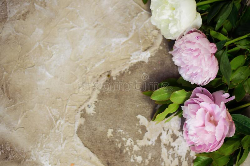 Frische rosa Pfingstrosen blüht auf gealtertem hölzernem Hintergrund Flache Lage Draufsicht mit Kopienraum Selektiver Fokus Geton stockfoto