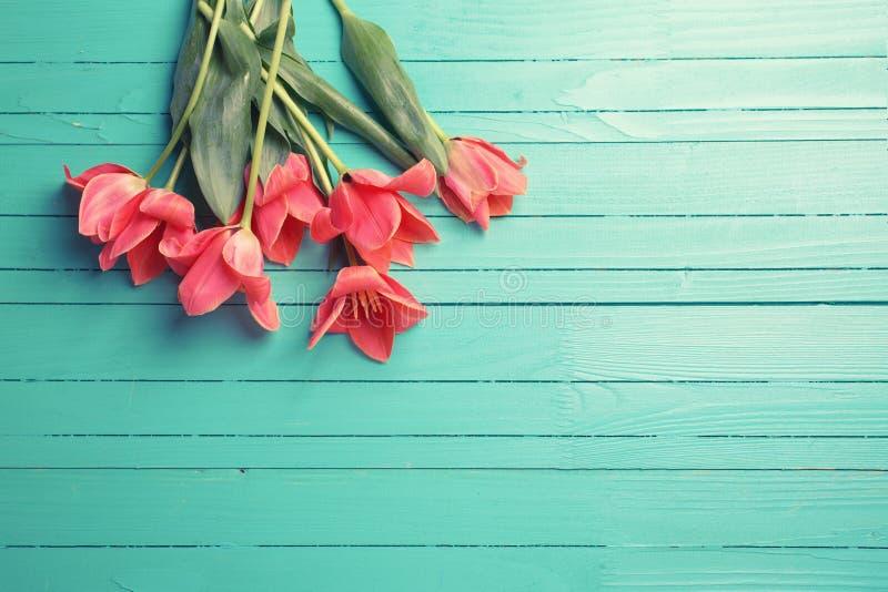 Frische rosa Tulpen auf Türkis malten hölzernen Hintergrund stockfoto