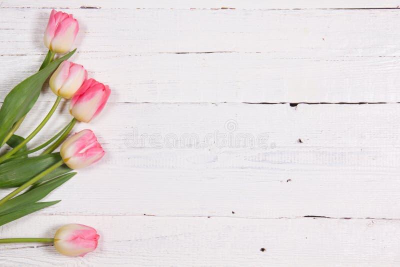 Frische rosafarbene Tulpen lizenzfreies stockfoto