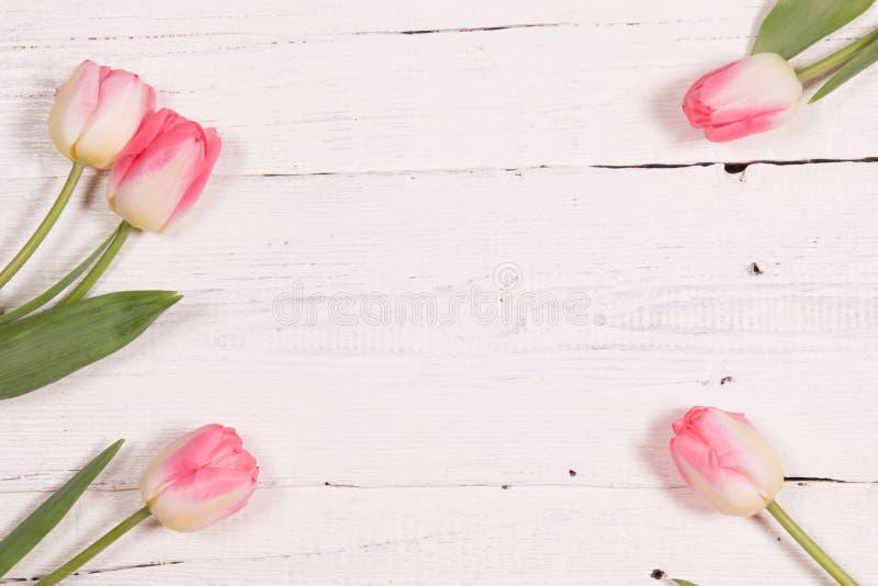 Frische rosafarbene Tulpen stockfotografie