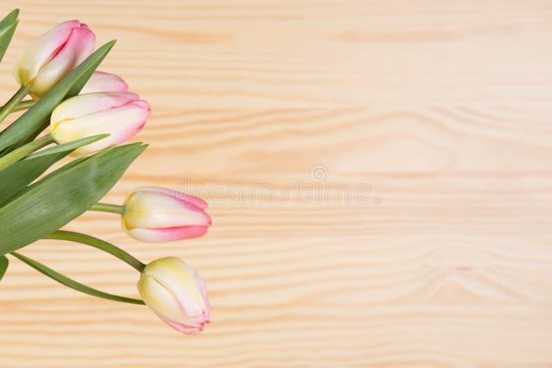 Frische rosafarbene Tulpen lizenzfreie stockfotos