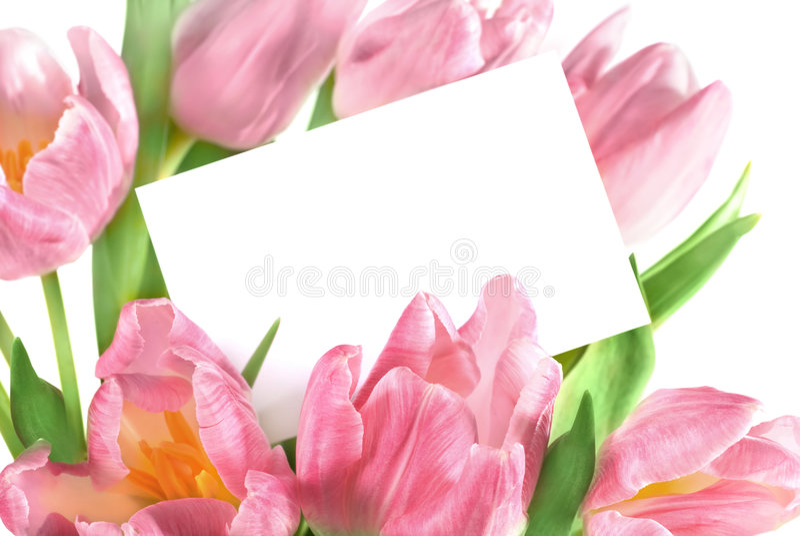 Frische rosafarbene Tulpen lizenzfreie stockbilder