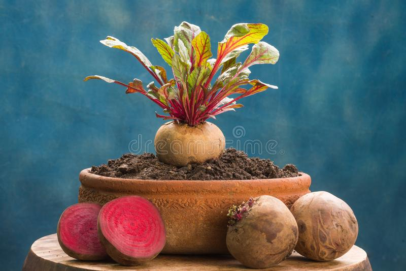 Frische Rote-Bete-Wurzeln gesunde hohe Gemüsenahrung stockfotos