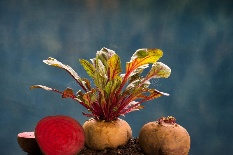 Frische Rote-Bete-Wurzeln gesunde hohe Gemüsenahrung stockbild