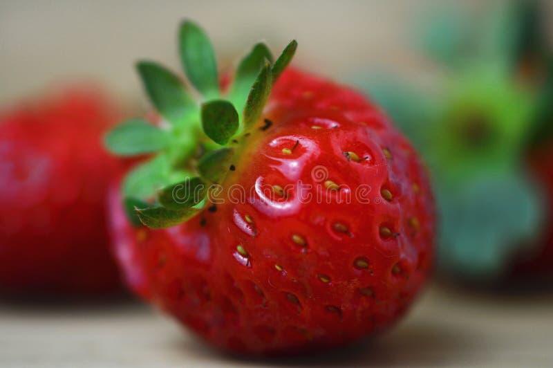 Frische rote Erdbeeren unter Holzabschluß herauf Ansicht lizenzfreies stockbild