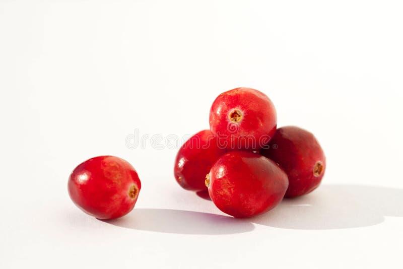 Frische rote Moosbeeren stockbild