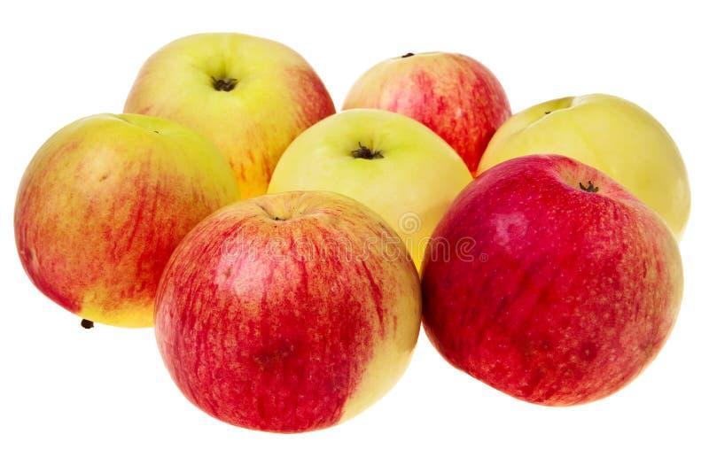 Frische rote und grüne Äpfel. stockbild