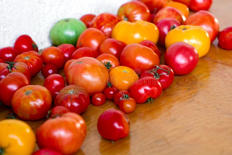 Frische saftige mehrfarbige Tomaten stockfotos