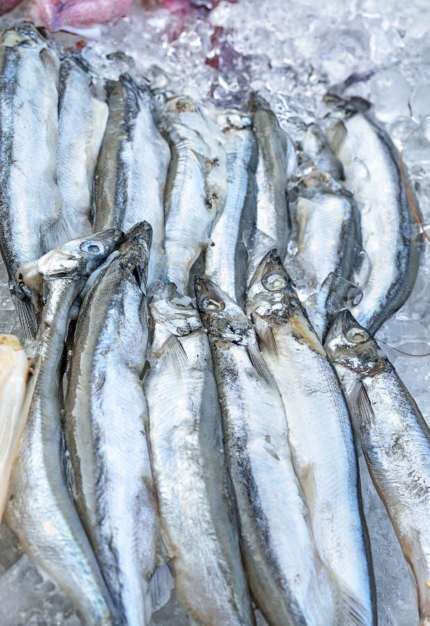 Frische Sardellen auf Eis am Meeresfrüchtestand stockfotos