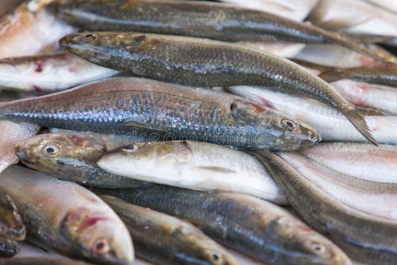 Frische Sardinen angezeigt auf dem Fischmarkt lizenzfreie stockfotografie