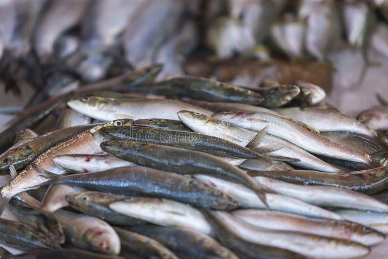 Frische Sardinen angezeigt auf dem Fischmarkt stockfotografie