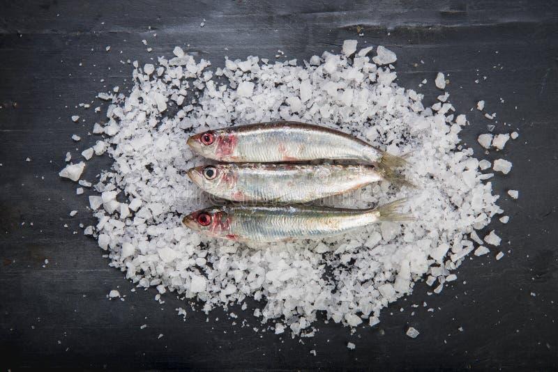 Frische Sardinen auf einem groben Salz überlagern über einem Schieferhintergrund stockfotografie