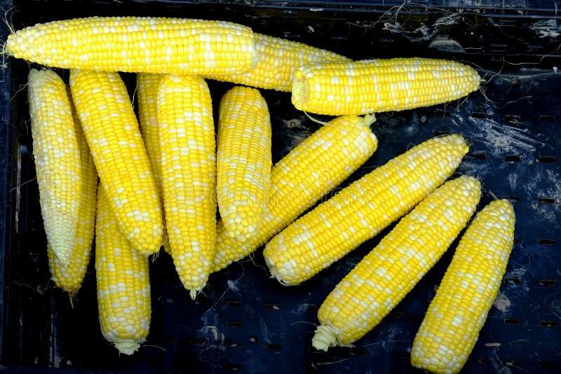Frische saubere Ohren von Maiskörnern im Behälter am Markt für Verkauf lizenzfreies stockfoto