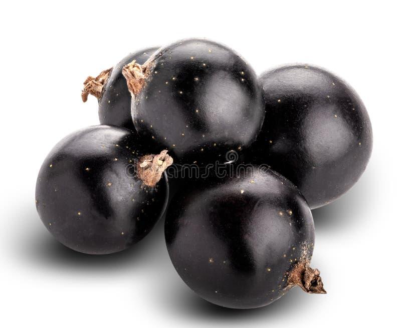 Frische schwarze Johannisbeere lokalisiert auf weißem Hintergrund Über Weiß lizenzfreies stockbild