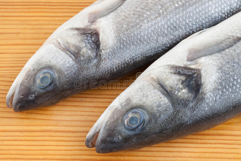 Frische Seebarschfische lizenzfreie stockbilder