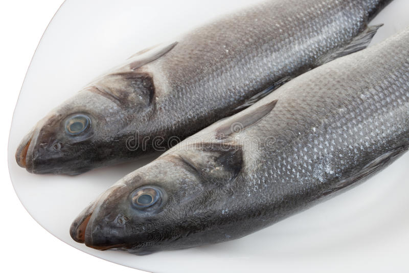 Frische Seebarschfische stockbilder