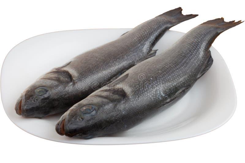 Frische Seebarschfische lizenzfreie stockfotos