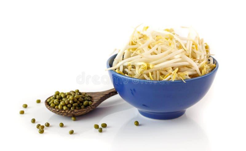 Frische Sojabohnensprossen auf Weiß stockbilder