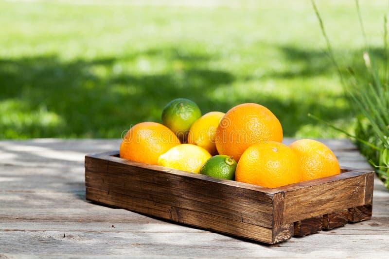 Frische Sommer-Früchte stockfotos