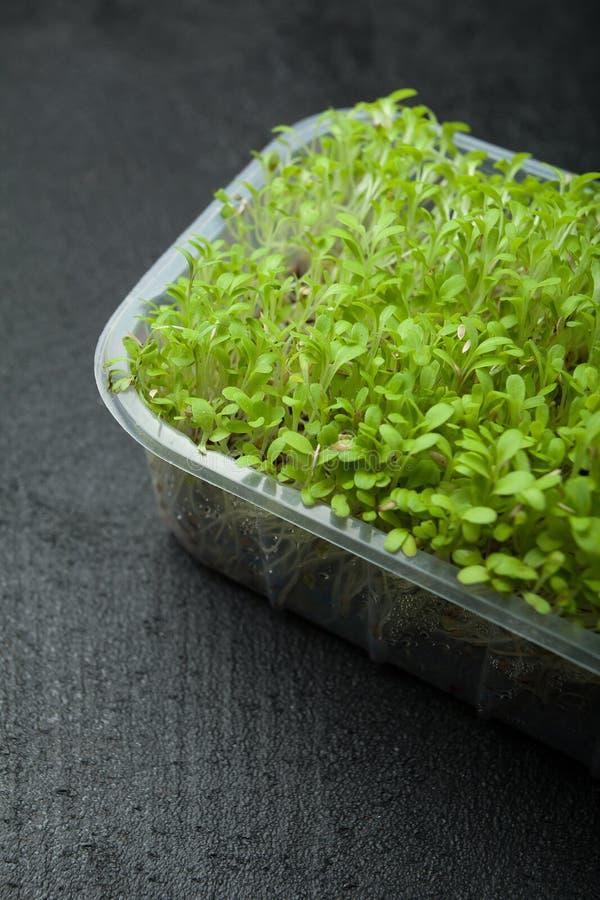 Frische Sprösslinge von mikro-grünem für eine Eignungsdiät lizenzfreie stockbilder