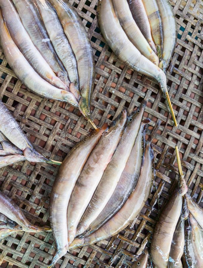 Frische stachelige Fische für getrocknet lizenzfreies stockfoto