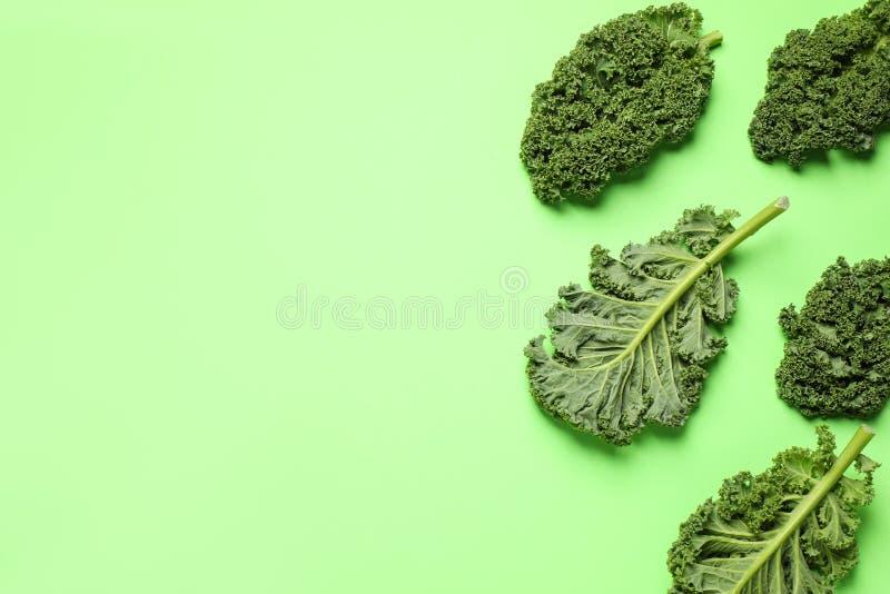 Frische Steinblätter auf hellgrünem Hintergrund, flach gelegt Textbereich lizenzfreies stockbild